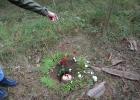 Blüten streuen im Urnenwald