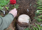 Urnengrab im Urnenwald